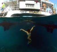 Pride of Maui $38 Snorkel Cruise Coupon