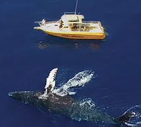 Makai Adventures | Save 20% On Whale Watch Adventures