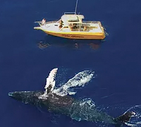 Makai Adventures   Save 20% On Whale Watch Adventures
