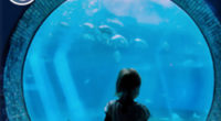 15% Off Aquarium Admission